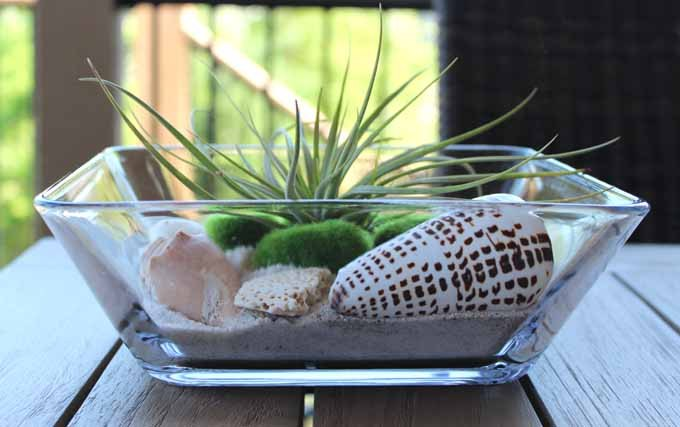 air plant terrarium tutorial