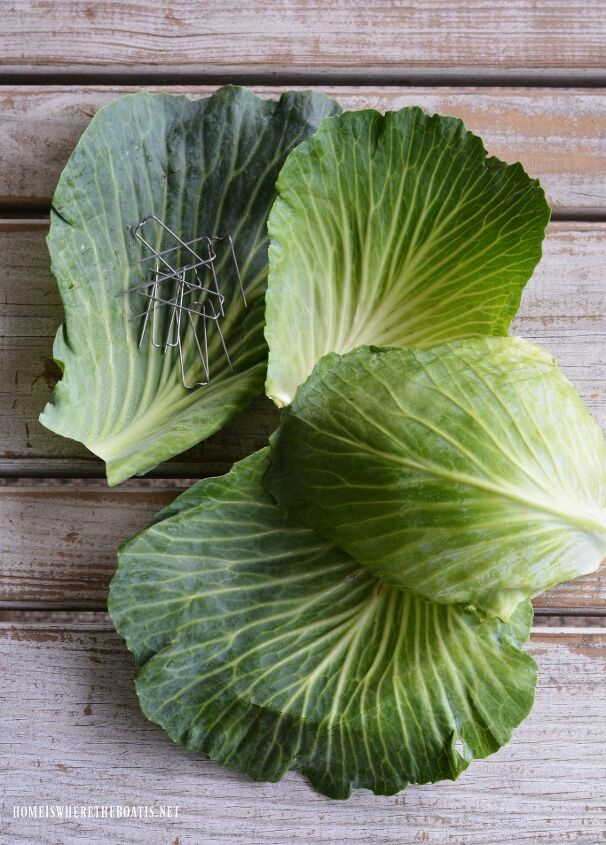 create a blooming cabbage for st patrick s day
