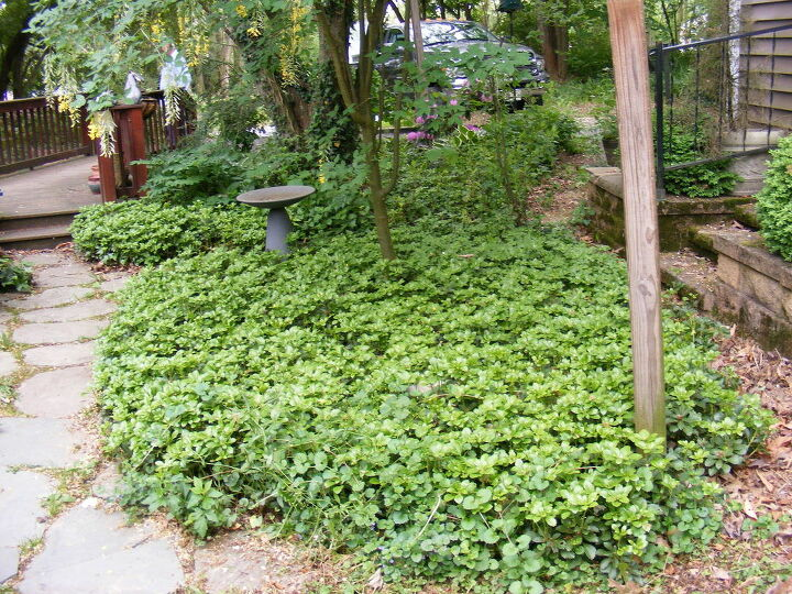 q can groundcover come back after being sprayed with roundup