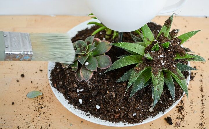 tall diy succulent planter