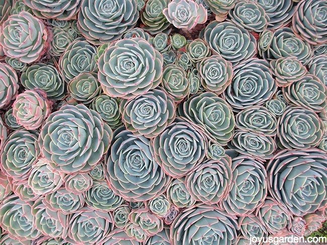 Top Varieties for a Trendy Succulent Garden