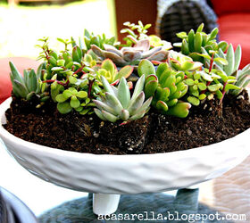 18 Creative Ways To Use Succulents For A Trendy Look Hometalk
