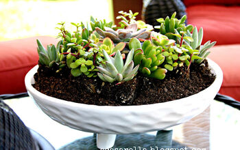 Succulent Garden Inspiration: Transform Your Decor With Succulents