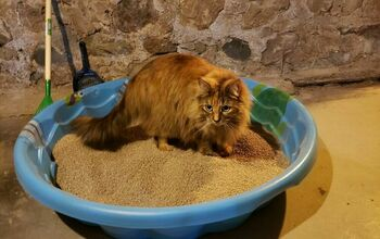 Kitty Litter Pool System- Making This Cleaning Chore Easier!