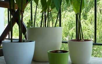 Quick, Easy, and Creative Ways to Grow an Avocado Tree From a Pit