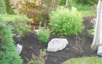 To Mulch or Not to Mulch? That is the Great Gardening Question!