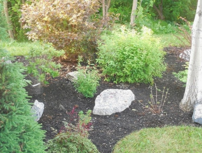 to mulch or not to mulch my gardening dilemma, After Mulching