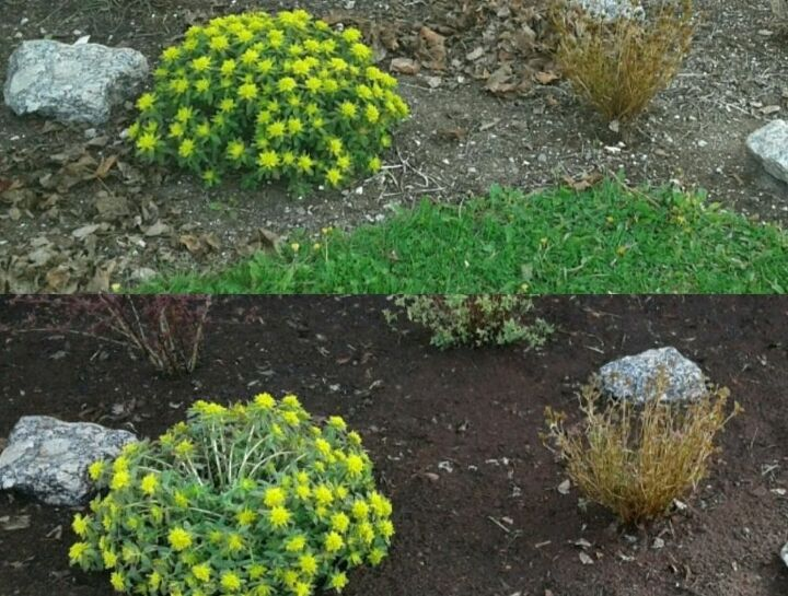 Before and After with Topsoil Dressing