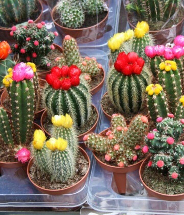 cactus house plants