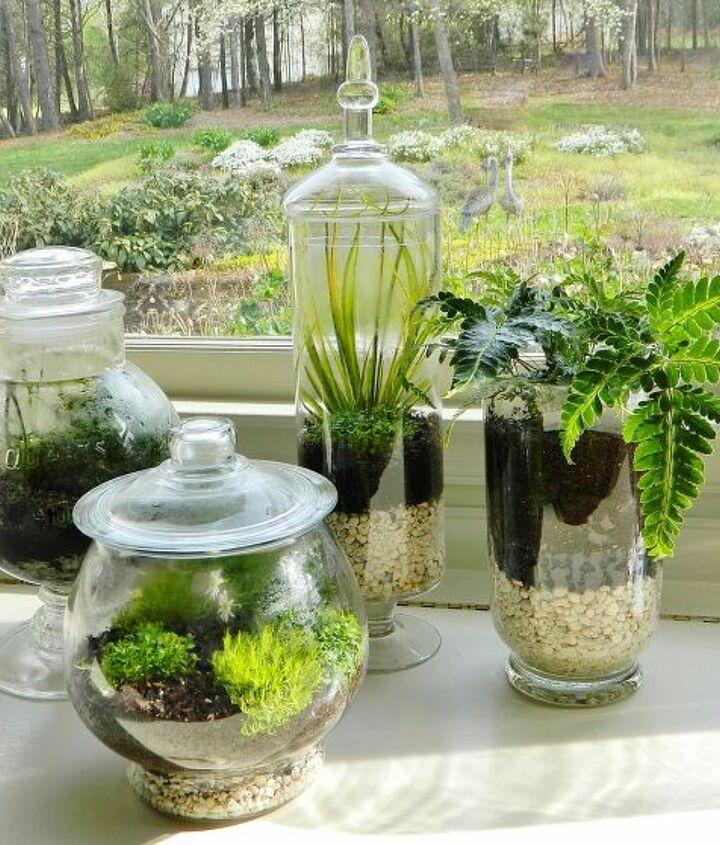Terrariums for Indoor Gardening
