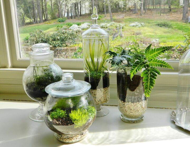 Terrariums for Indoor Gardening