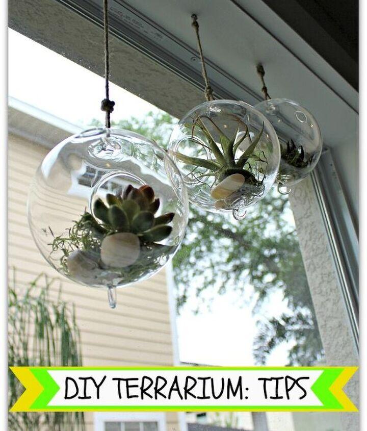 Hanging Terrarium Plants