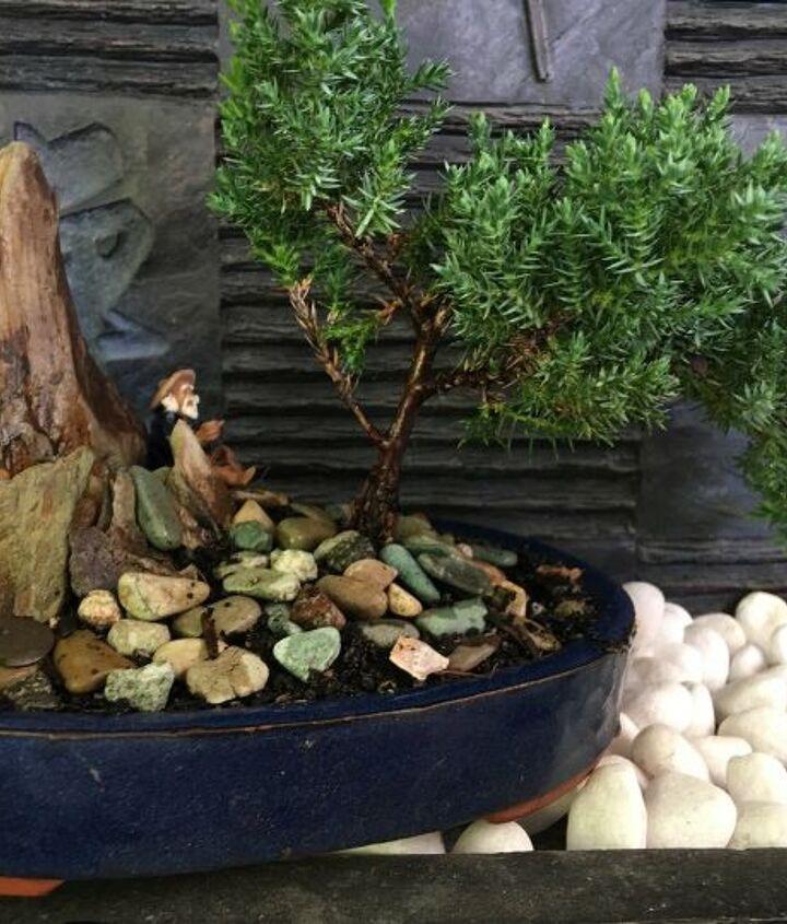 s zen garden ideas, Bonsai as a Zen Garden Feature