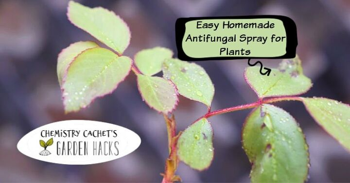 easy homemade fungicide spray for plants two ingredients