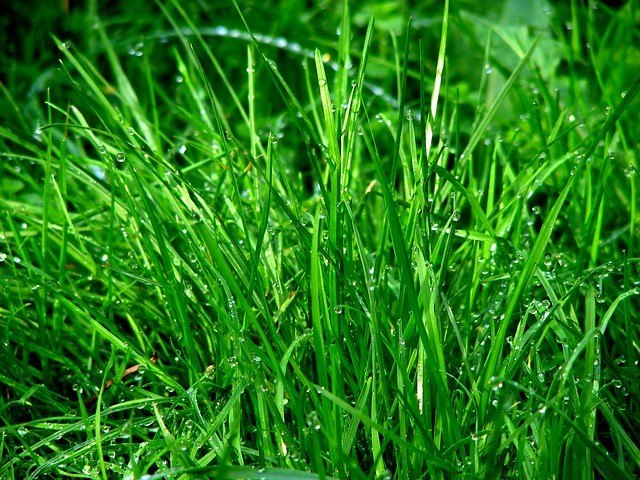 How to Grow Grass Fast (Lana)