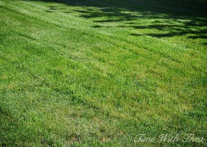 How to Grow Grass Seed (Time With Thea)