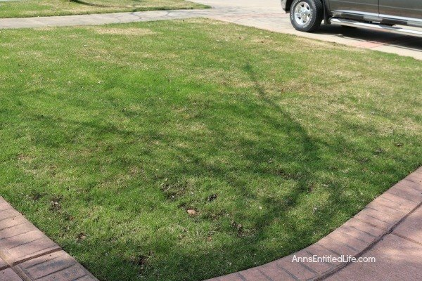 How to Get Grass to Grow (Ann's Entitled Life)