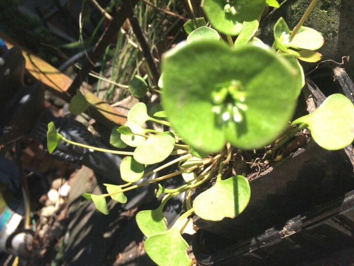 q mystery plant