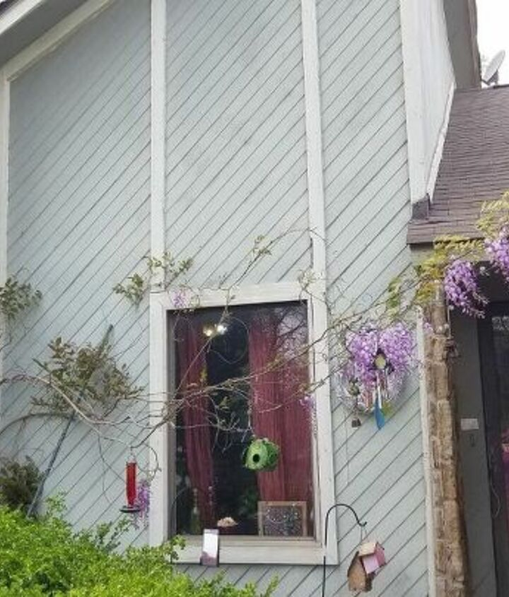q any suggestions for directing wisteria away from house