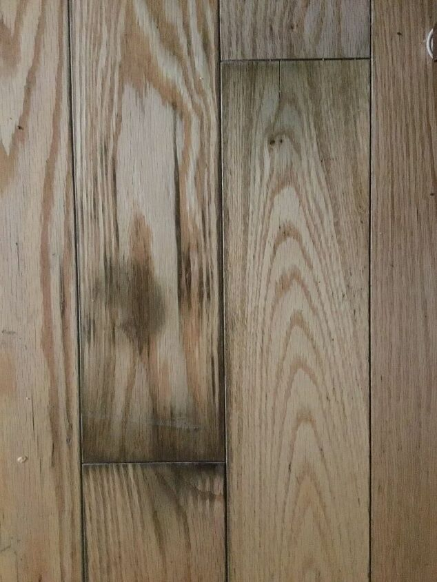 Laminated Wood Flooring, How To Get Urine Out Of Laminate Flooring