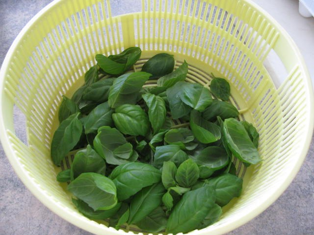 how to grow and preserve fresh basil