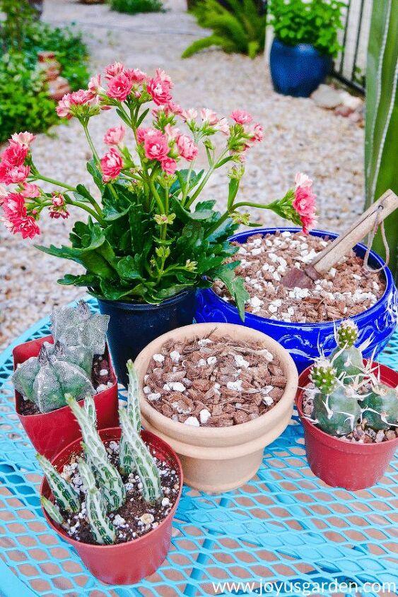 diy succulent cactus soil mix