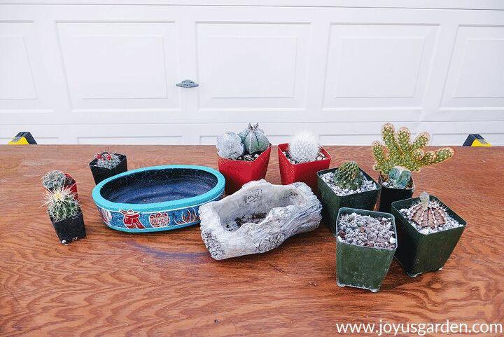 how to make an indoor cactus garden