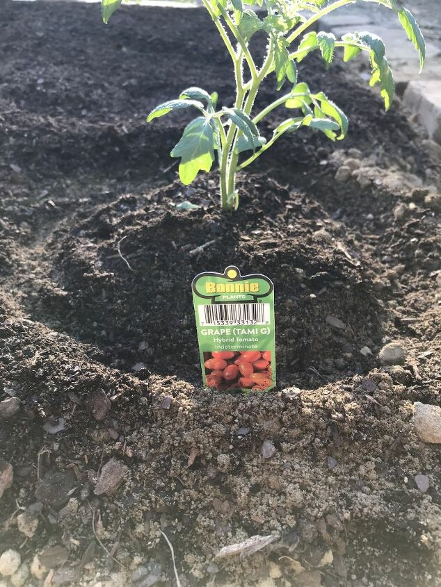 garden for beginners simple easy and fool proof