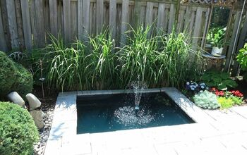 Pond Maintenance: Get Your Pond Ready for Summer!