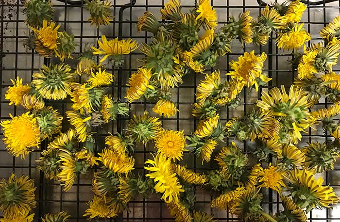 how to make dandelion oil