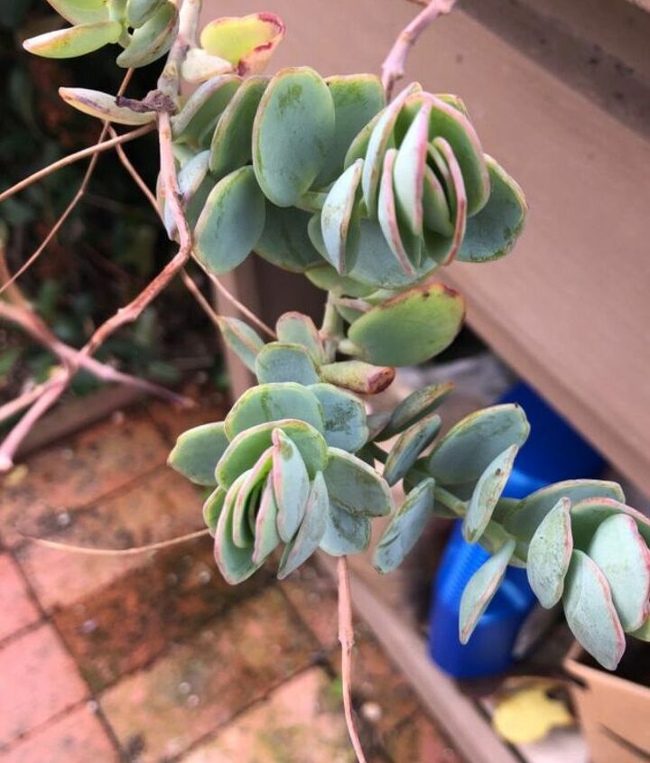 q what is the name of this plant