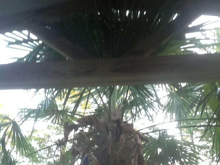 q help please what s wrong with my windmill palm