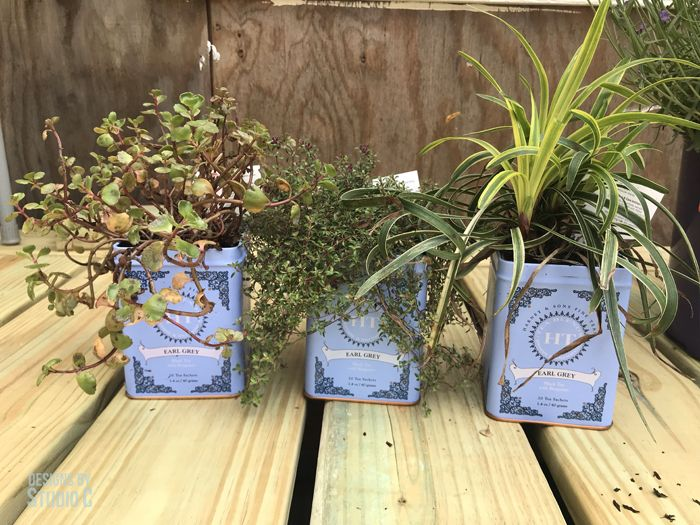 diy metal tea tin planters