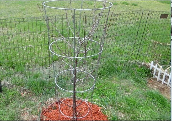 tomato cage plant ideas