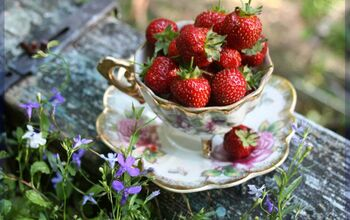 The Strawberry Patch, Delicious Hacks