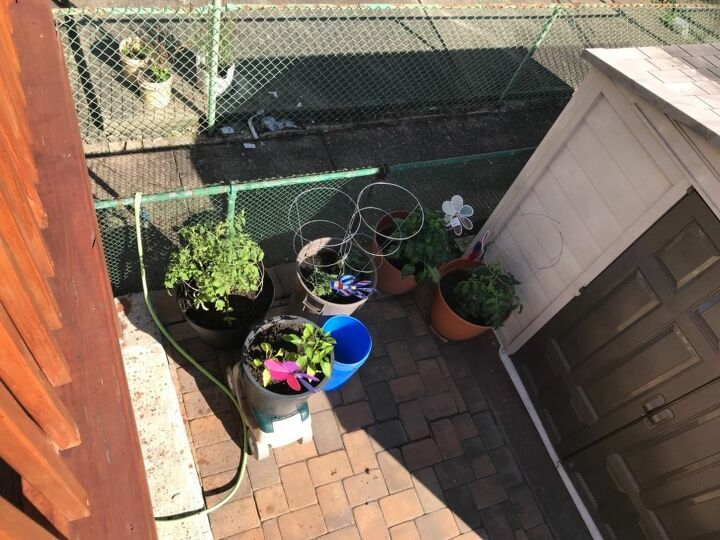 q about my outdoor vegetables they are in containers in the they
