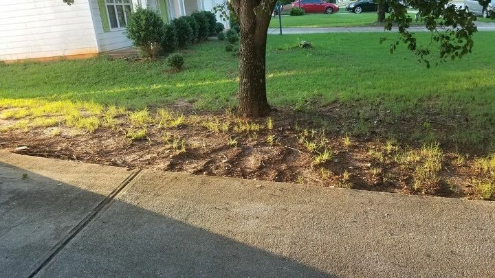 q how to grass in shaded areas and repairsdrybspot