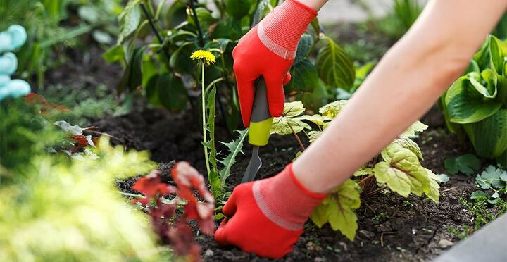 common weeds and how to eliminate them