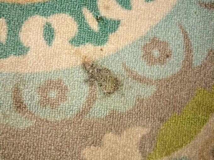 q how do i fix burn on outdoor rug