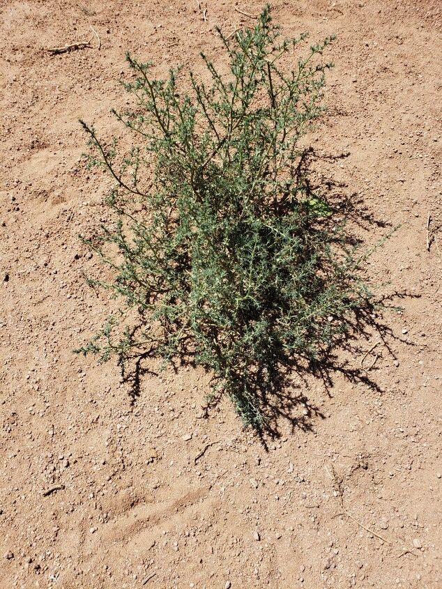 q how do i kill az weeds