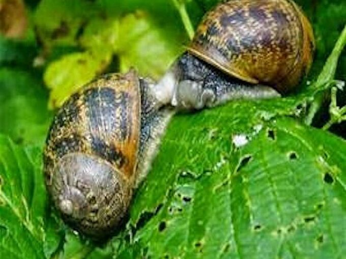 good snails came to my rescue