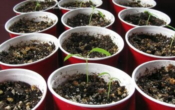 Recycling Containers for Starting Seeds