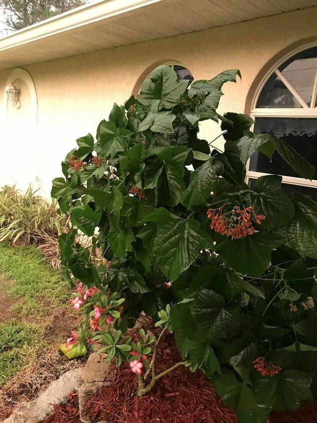q how do i take care of this tree bush