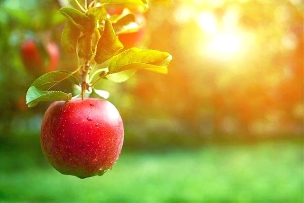 how to grow dwarf fruit trees at home