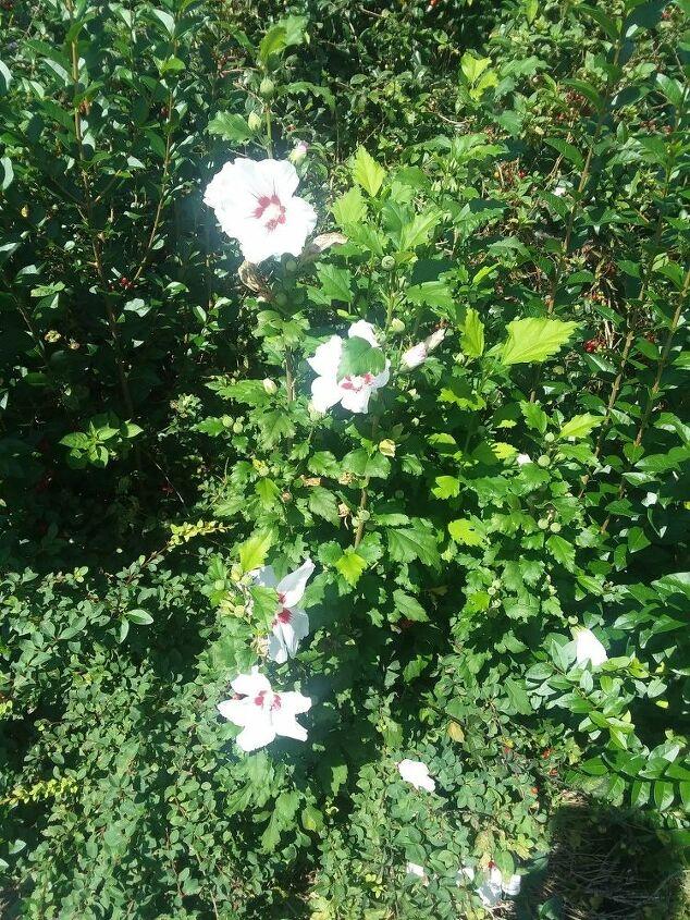q plant help