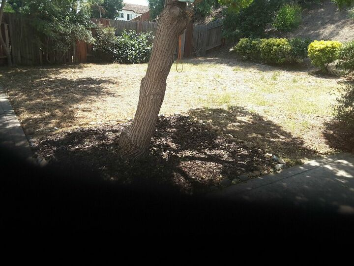 q how can i tranform this backyard space