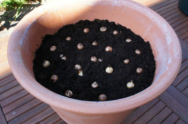 how to plant a lasagna bulb pot