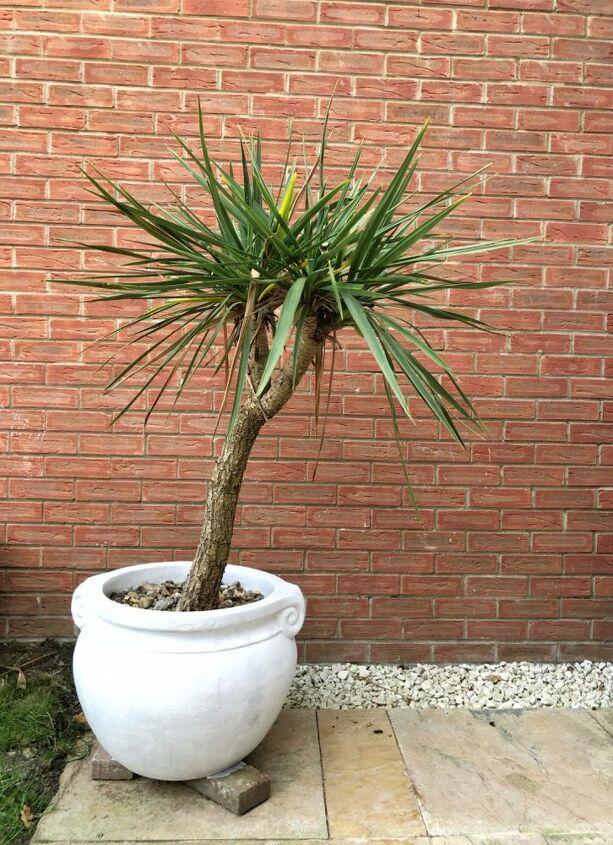 plant pot transformation