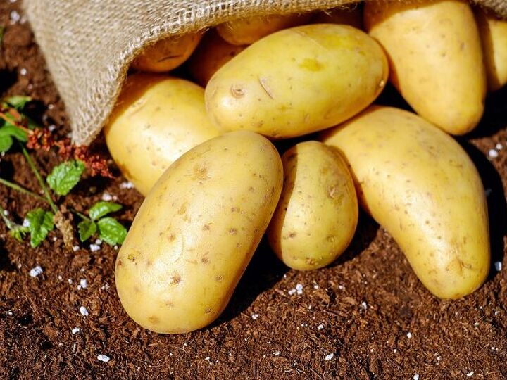 Some Easy Tips on Growing Potatoes at Home
