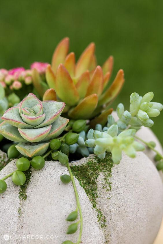 succulent concrete pumpkins